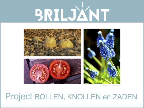 Thumbnail Briljant-project BOLLEN KNOLLEN en ZADEN